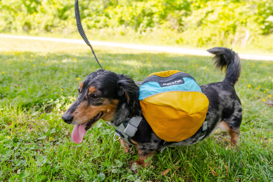 Adventurer EZ Latch™ Dog Pack (2-piece)