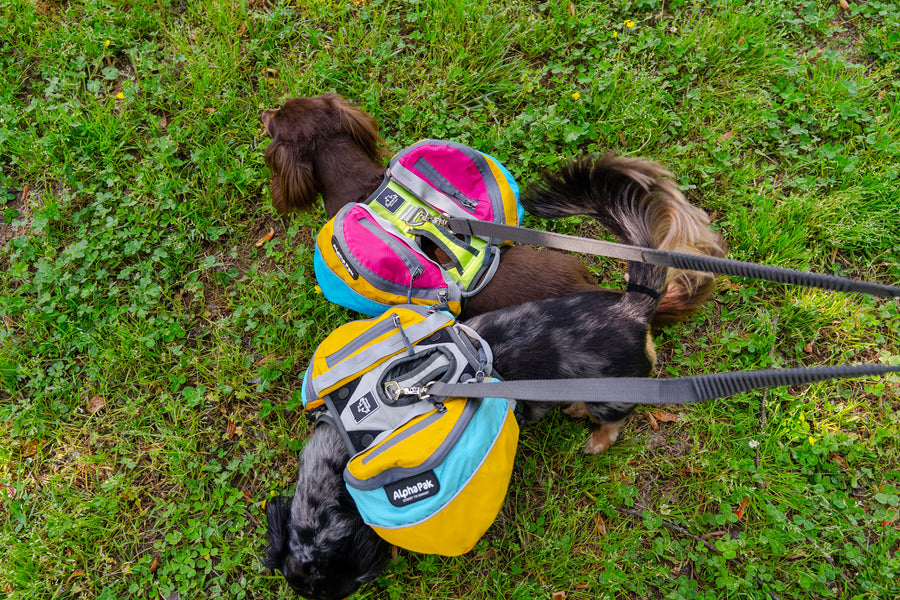 Wanderer Dog Pack with EZ Fit™ Harness (1-piece)