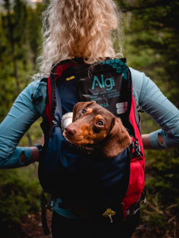 Girl and her dog hiking trails in Canmore and Banff, Alberta, Canada. She is wearing multiple layers and has Algi spirulina powder and IMPACT Bars in her bag.