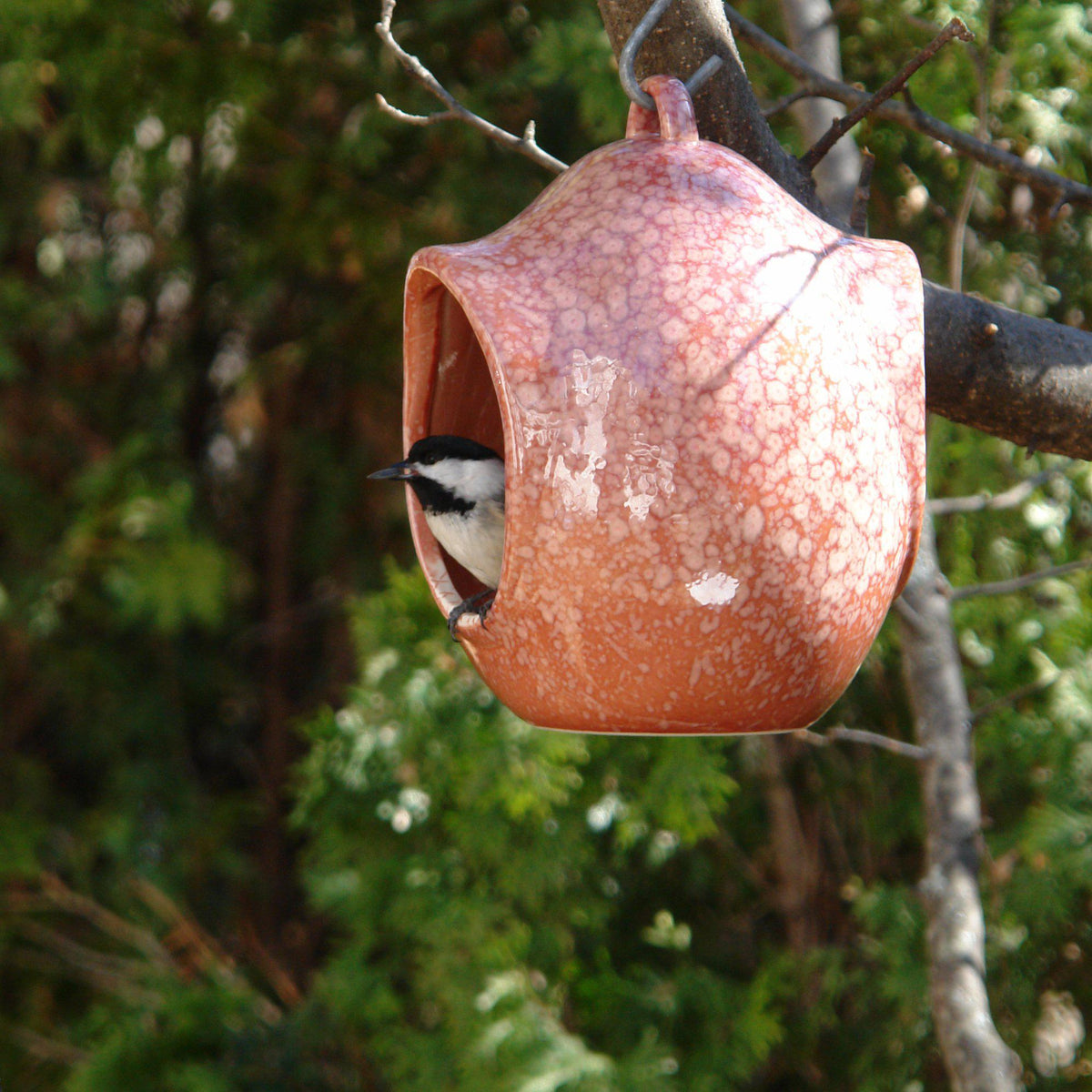 Egg Fly-Through Feeder
