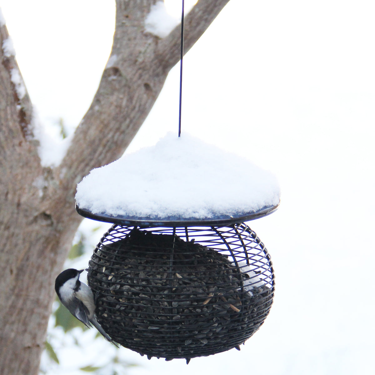 Sphere Bird Feeder