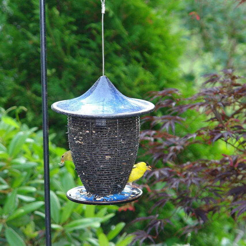 Alcyon Feeder by Byer of Maine