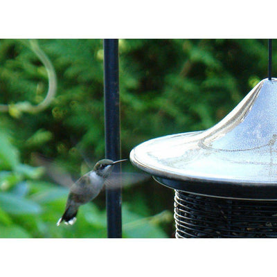 Humming Bird visits Alcyon Feeder