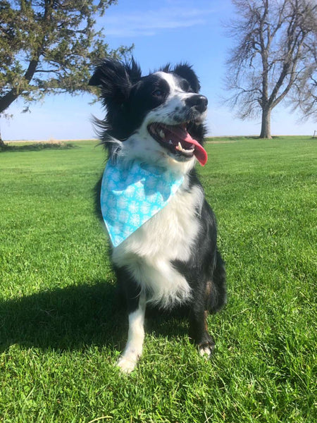 BLUE DANDELIONS DOG BANDANA