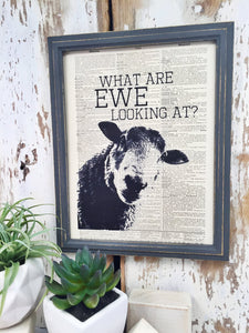 EWE LOOKING AT DICTIONARY PRINT (WHSL)