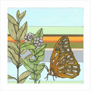 Milkweed : Reproduction