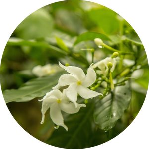Jasmine Attar Chameli Essential Oil