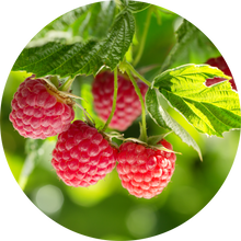 Load image into Gallery viewer, Raspberry Leaf Absolute
