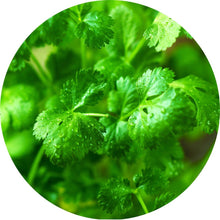 Load image into Gallery viewer, Coriander Essential Oil