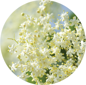 Elderflower Essential Oil