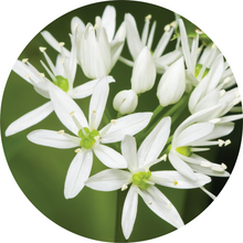 Load image into Gallery viewer, Garlic Essential Oil