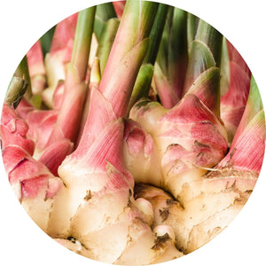 Ginger Root Essential Oil