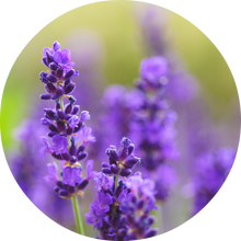 Load image into Gallery viewer, Lavender Absolute