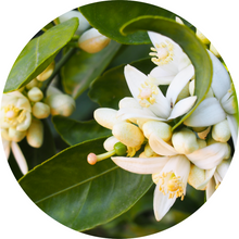 Load image into Gallery viewer, Orange Blossom Absolute