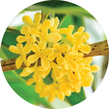 Load image into Gallery viewer, Osmanthus Absolute