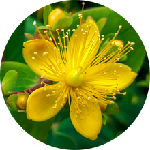 Load image into Gallery viewer, Saint Johnswort Essential Oil