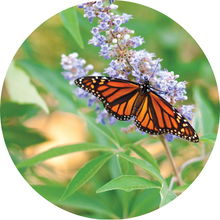 Load image into Gallery viewer, Vitex Berry Essential Oil