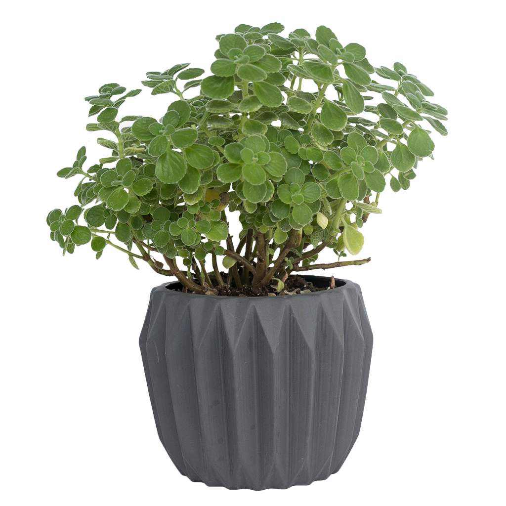 Black Fluted Flower Pot