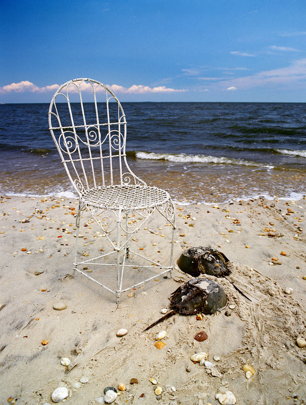 Mrs. Davis' Chair and Horeshoe crabs in Delaware