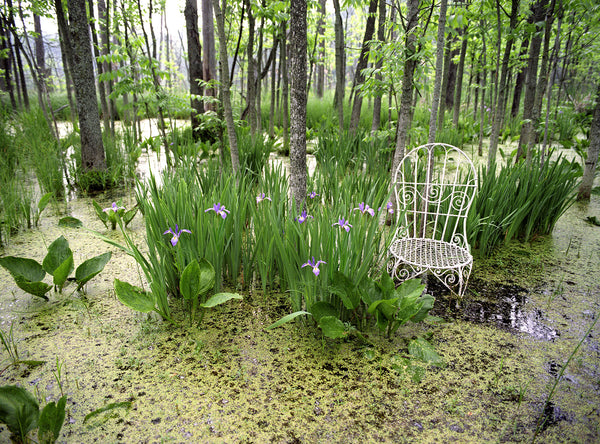 Wild Iris and Mrs. Davis' Chair in Indiana