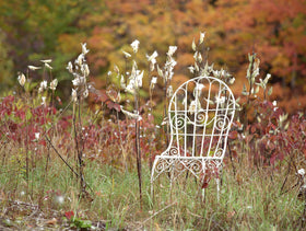 Milkweed and Mrs. Davis' Chair in Vermont