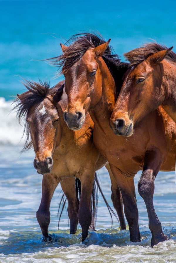 Portrait Of 3 Horses