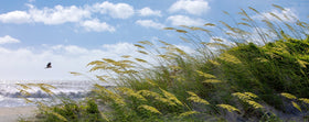 Sea Oats, Surf, and Blackbird