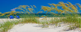 Sea Oats and Summer Dunes