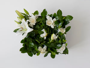 Luxury floral gift box with gardenias and lilies