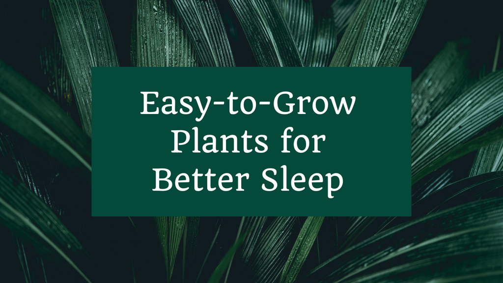 Easy-to-Grow Plants for Better Sleep