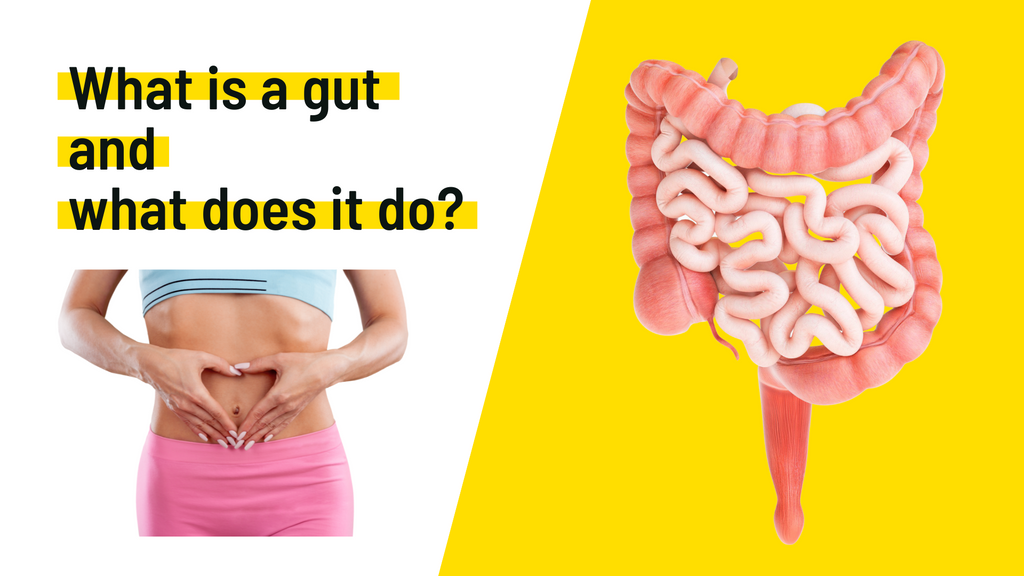 What is a gut and what does it do?