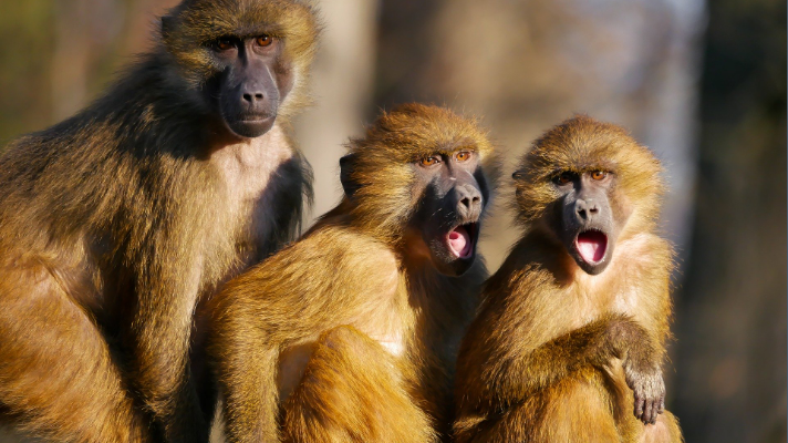 shocked monkeys courtesy of spark post