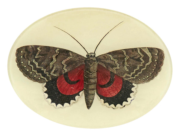 Red and Brown Butterfly Oval Tray