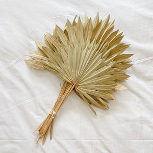 Dried Sun Palms - (Set of 5)