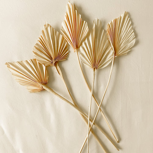 Dried Palm Spears - Set of 5