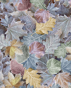 Multicolored Winter Leaves