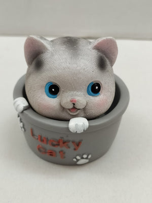 Buy Cute Kitten in Spring Tub (XM15) Online