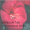 Hibiscus & why you should be drinking more of it