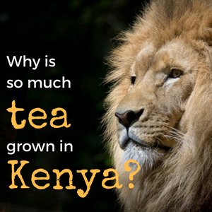 Why is So Much Tea Grown in Kenya?
