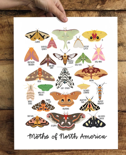 Field & Forest Design - Moths of North America