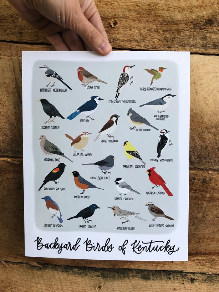 Field & Forest Design - Backyard Birds of Kentucky