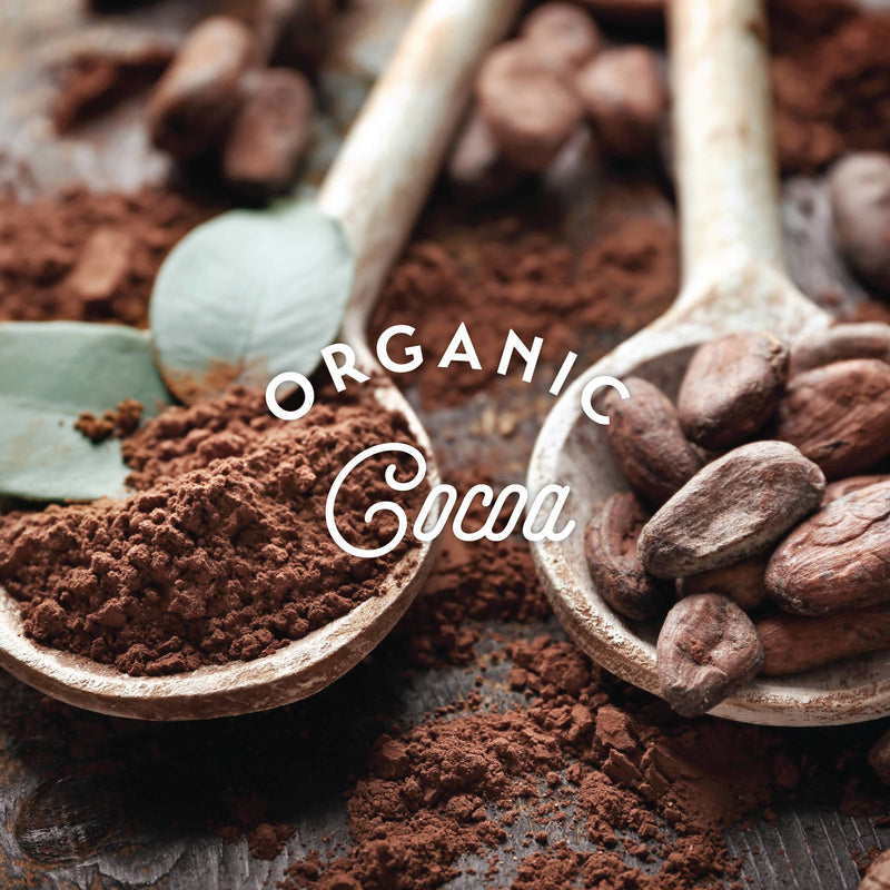 spoon of organic cocoa beans next to spoon of organic cocoa powder