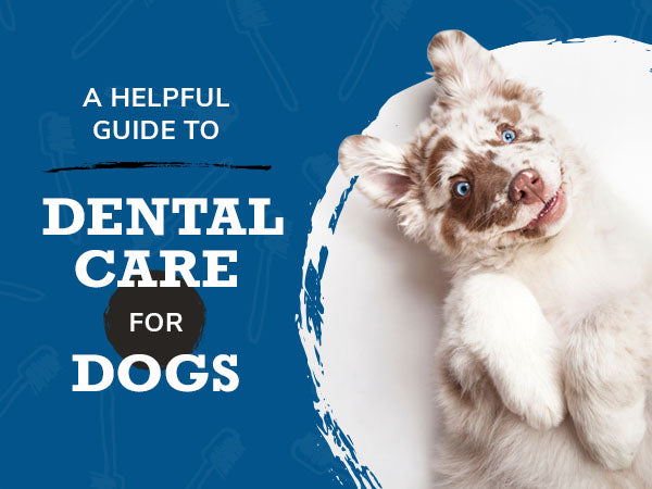 A Helpful Guide to Dental Care for Dogs