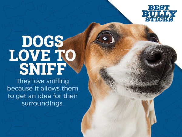Dogs love to sniff