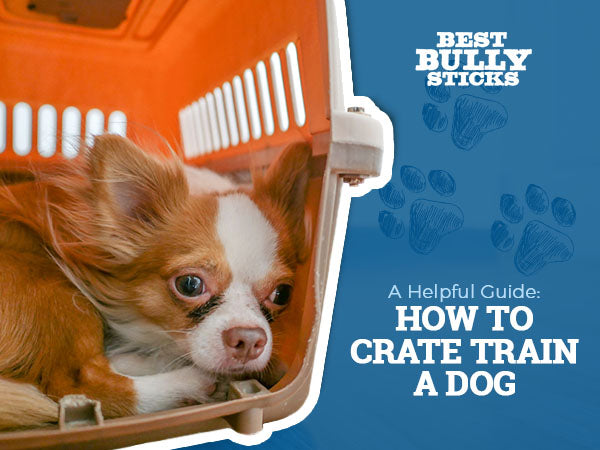 A Helpful Guide How to Crate Train a Dog