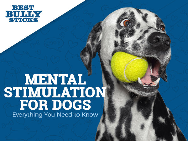 Mental Stimulation for Dogs – Everything You Need to Know