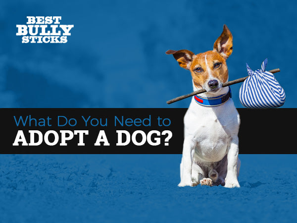 What Do You Need to Adopt a Dog