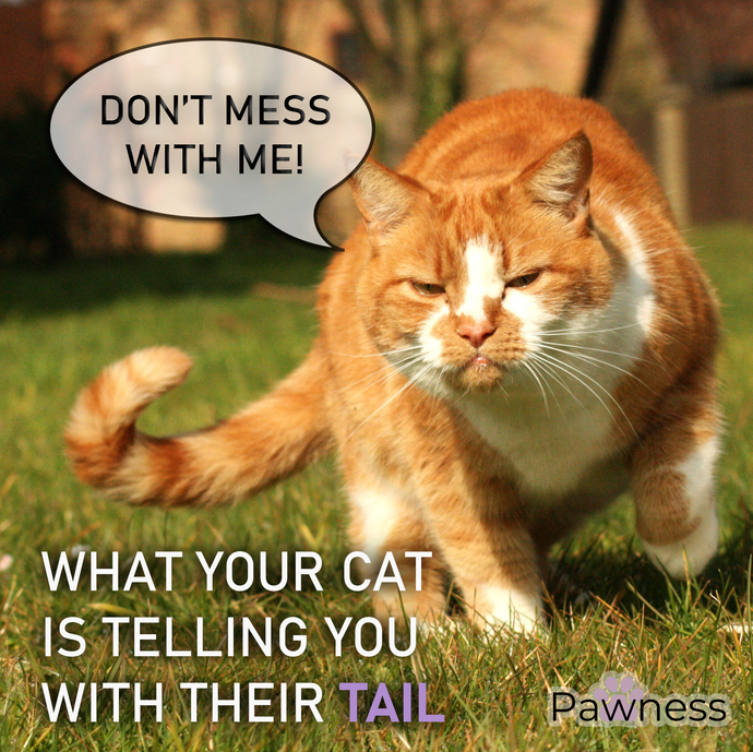 The Tales Your Cat's Tail Tells