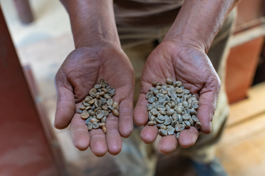 On the left, coffee rejected by one of their two optical sorters, on the right the accepted coffee