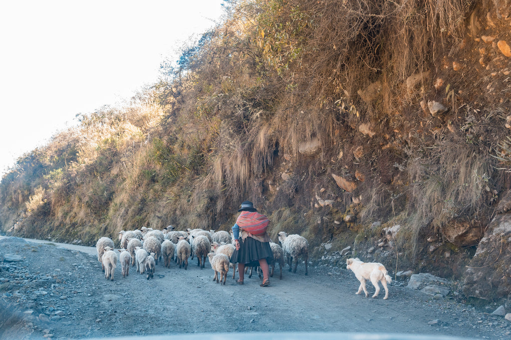 We shared the roads with plenty of animal herders.